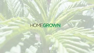image feature Homegrown Cannabis Company