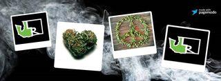 image feature The Marijuana Mercantile
