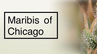 image feature Maribis of Chicago