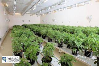 image feature Nevada Made Marijuana - Laughlin