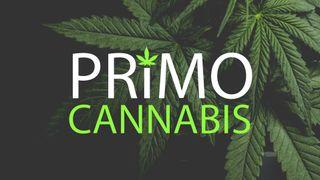 image feature Primo Cannabis - Otis Orchards, Spokane