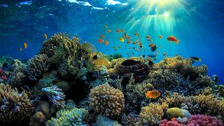 image feature Reef Dispensaries - Queen Creek, AZ