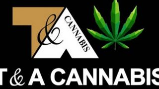 image feature T & A Cannabis
