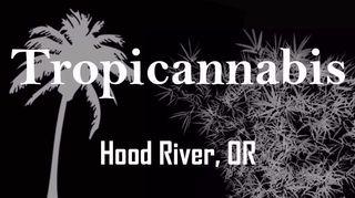 image feature Tropicannabis Club