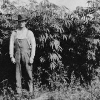 Buddy Green's Cannabis Co.