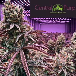 Central Purp