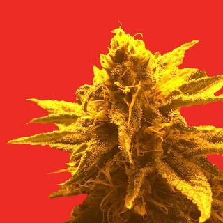 Superb Herb Company