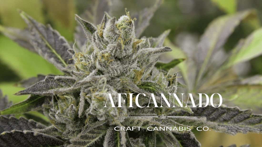 store photos Aficannado Craft Cannabis Company