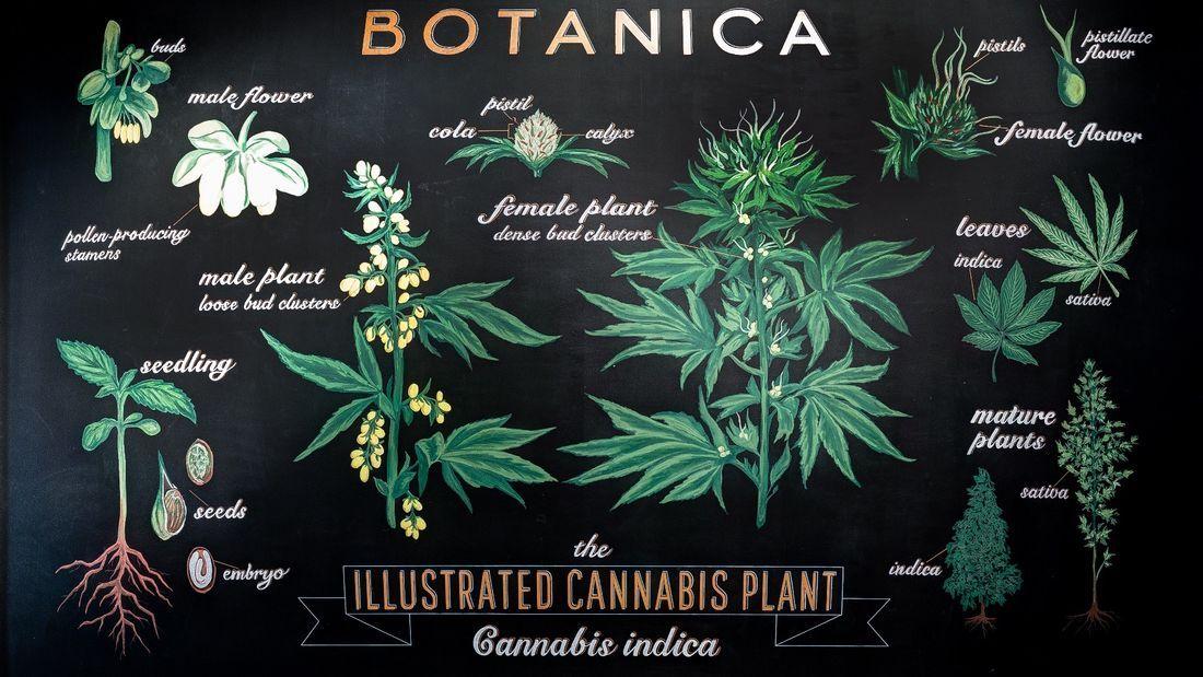 store photos Botanica
