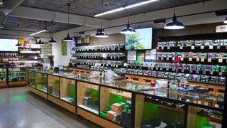 store photos CannaDaddy's
