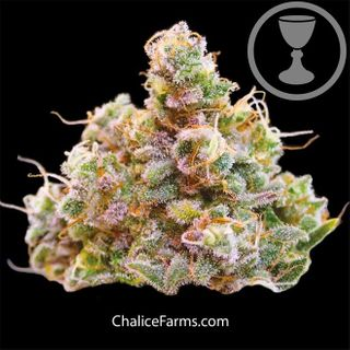 store photos Chalice Farms Dundee