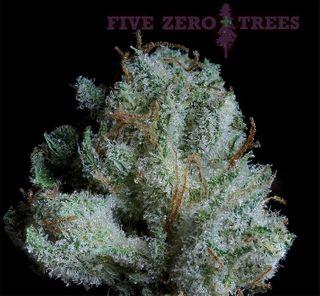 store photos Five Zero Trees East - NOW OPEN!!