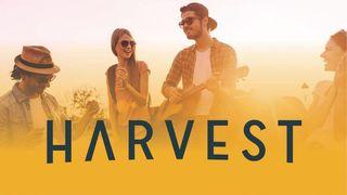 store photos Harvest HOC - Baseline
