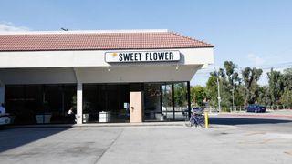store photos Sweet Flower - Studio City