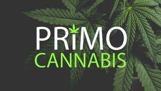 store photos Primo Cannabis - Otis Orchards, Spokane
