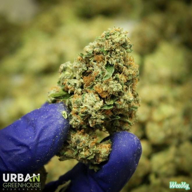 store photos Urban Greenhouse Dispensary