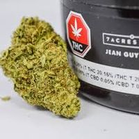 feature image 7acres Jean Guy - 3.5g DF
