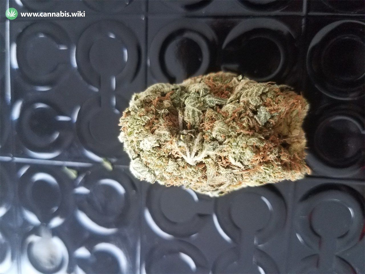 Cannabis Wiki - Strain 707 Headband - 707 - Hybrid