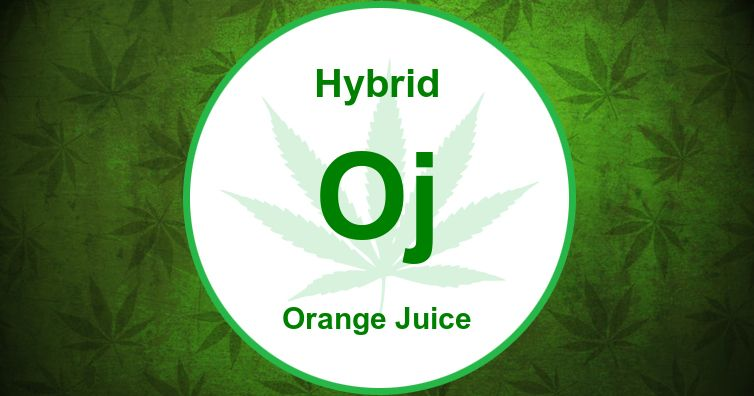 Orange Juice Strain photos   Cannabis Wiki
