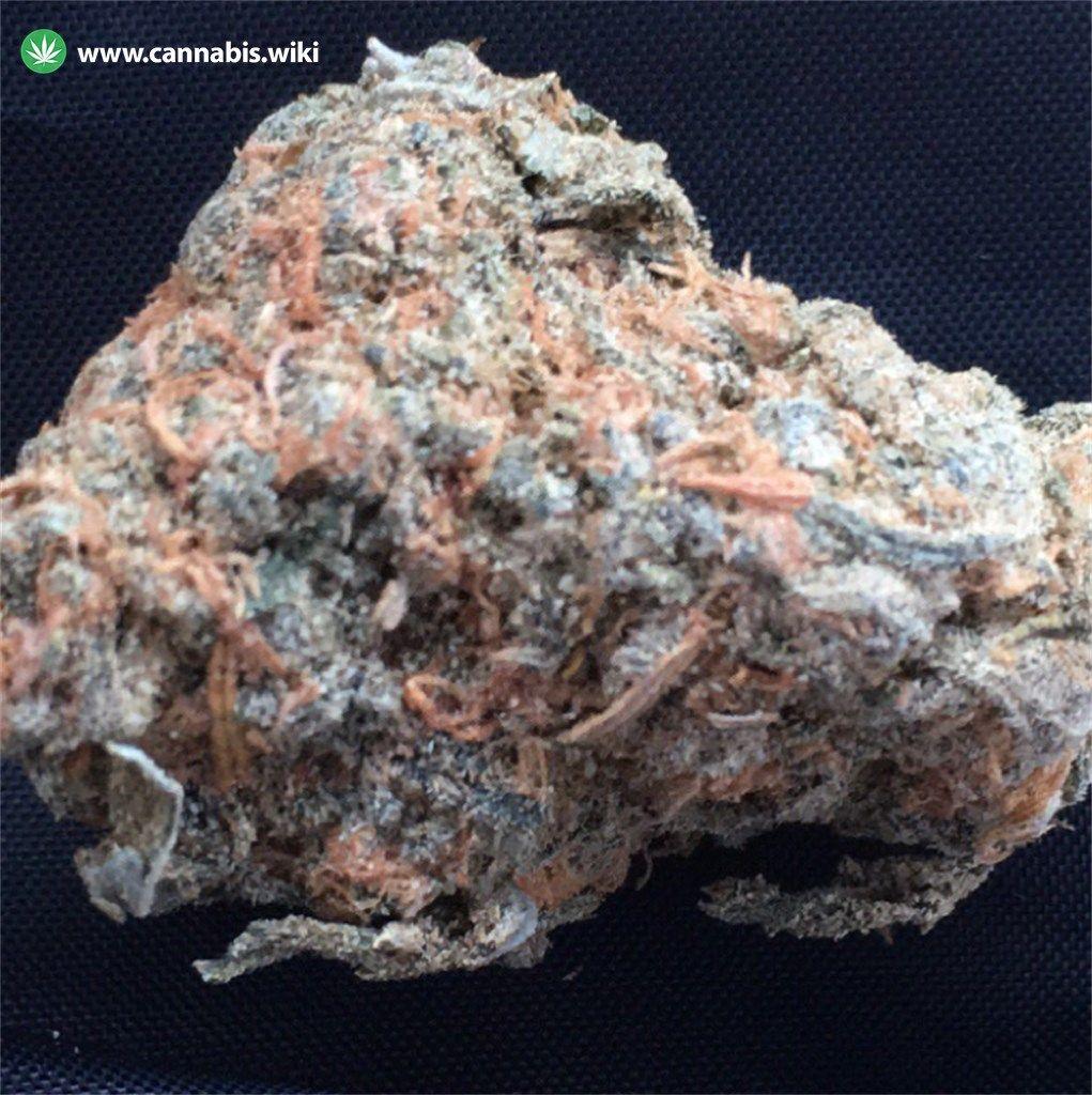 Cannabis Wiki - Strain Pineapple Express - Pex - Hybrid