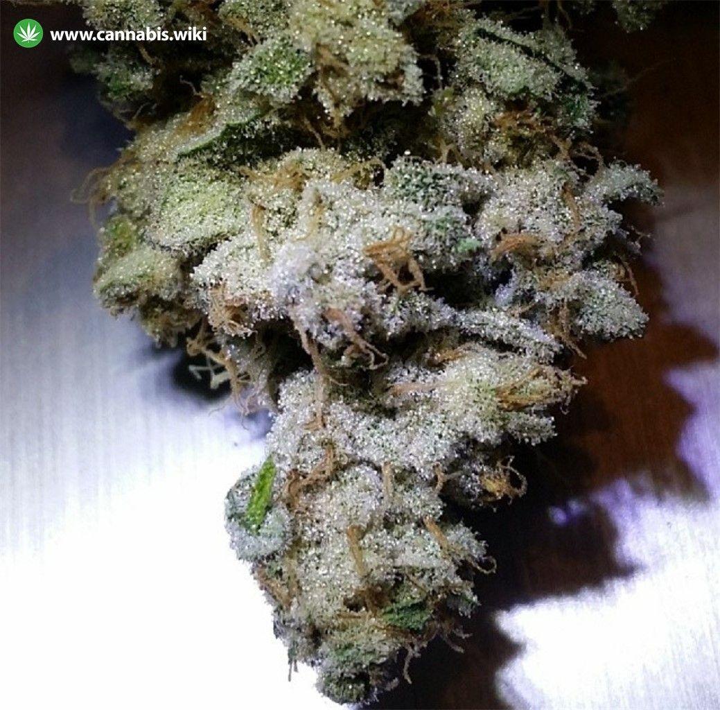 Sunshine #4 Strain | Cannabis Wiki