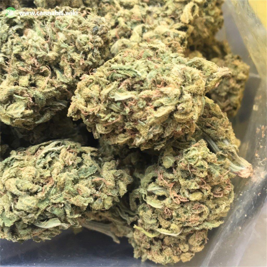 Cannabis Wiki - Strain 9 Pound Hammer - 9lb - Indica