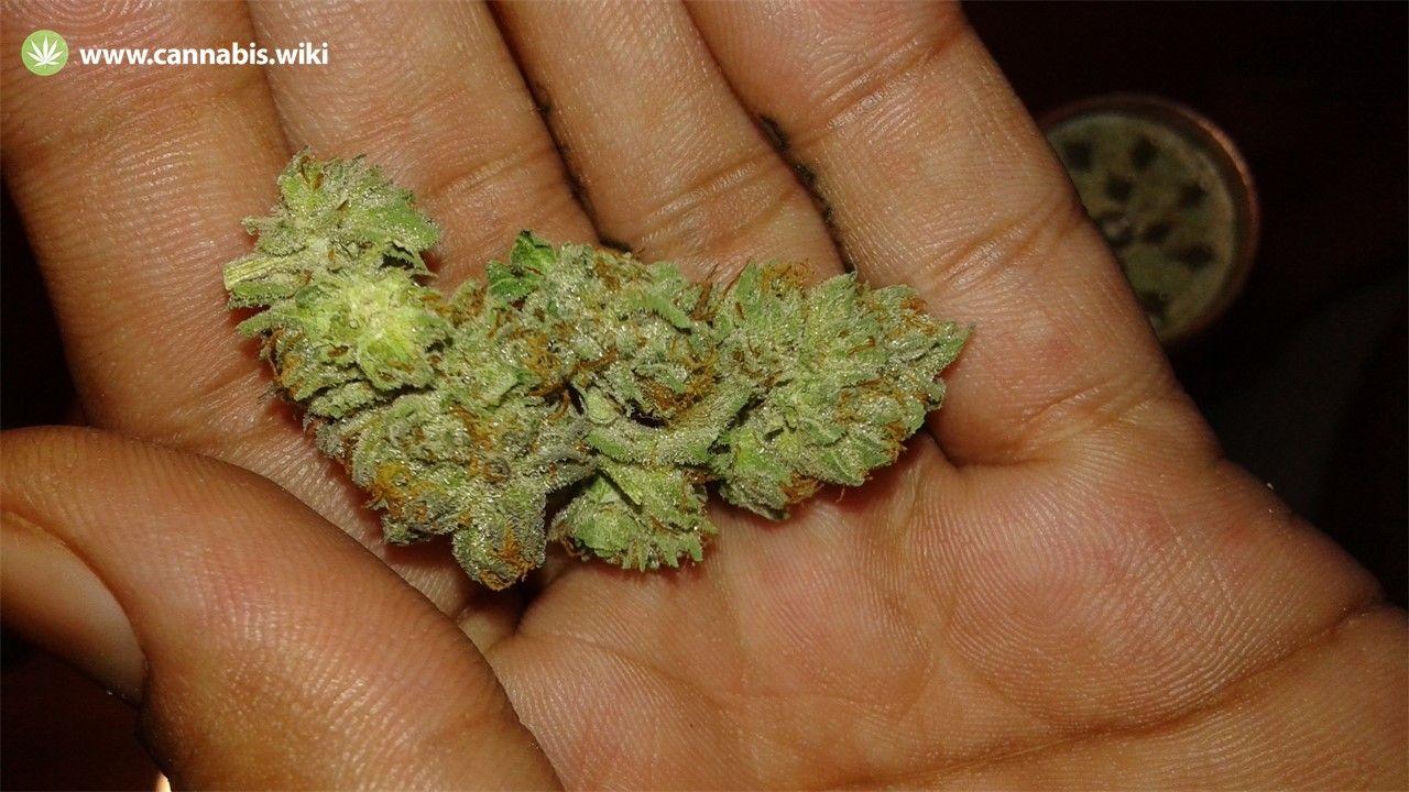 Cannabis Wiki - Strain Afghan Hawaiian - Ahi - Indica
