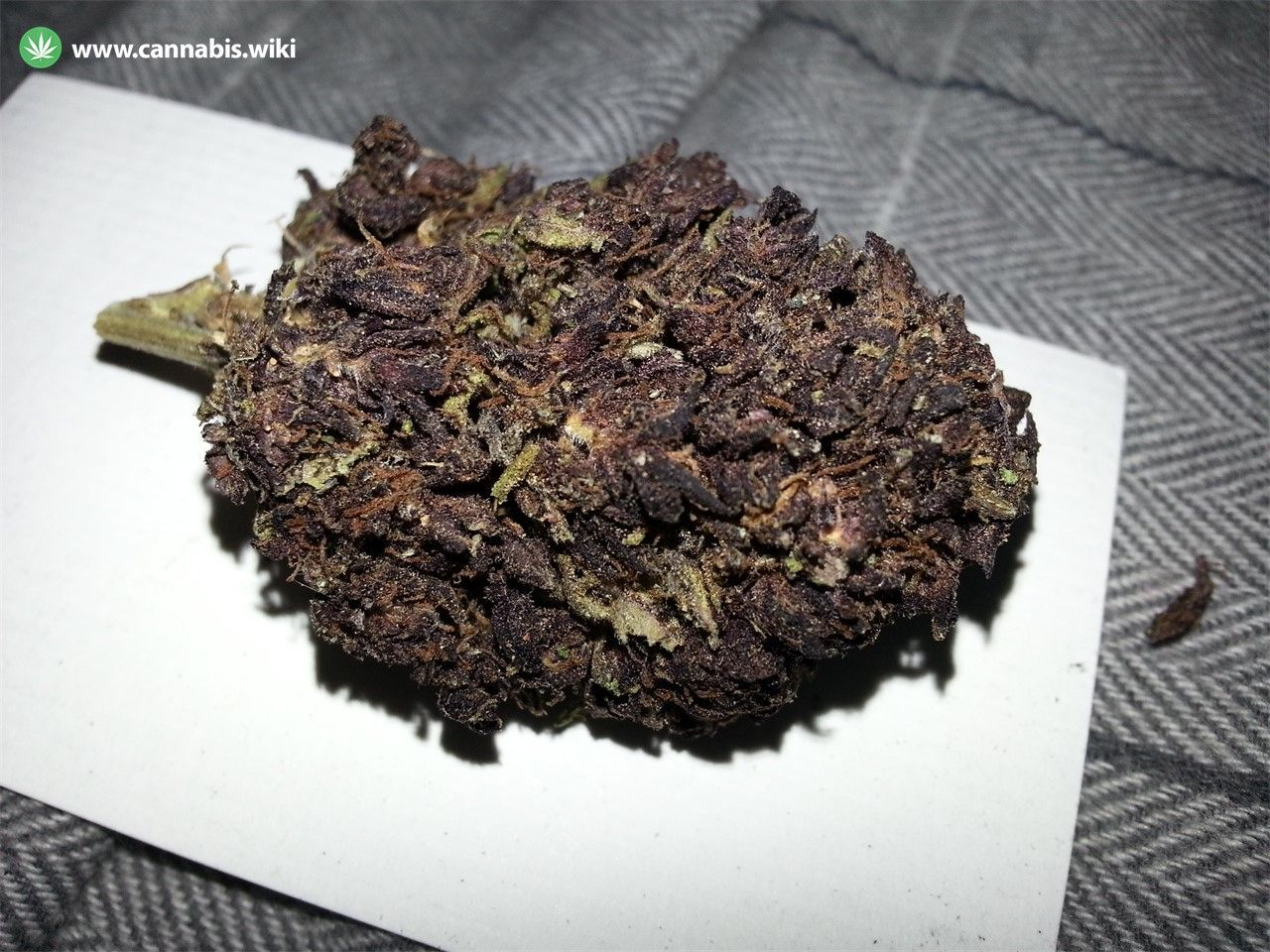 Cannabis Wiki - Strain Black Label Kush - Bck - Indica