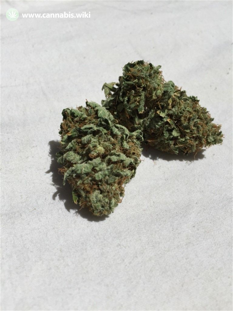 Cannabis Wiki - Strain Bubble Cheese - Bc - Indica