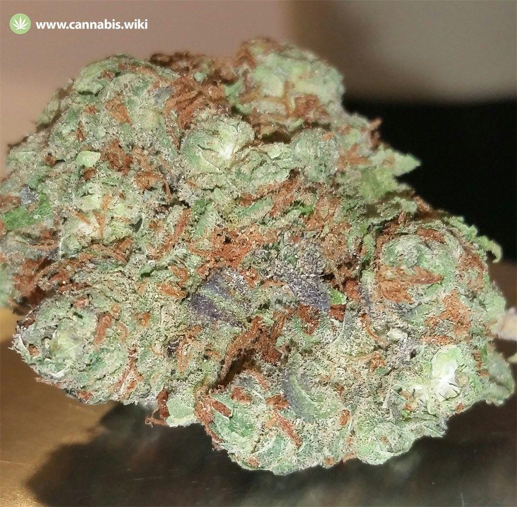 Cannabis Wiki - Strain Burkle - Bur - Indica
