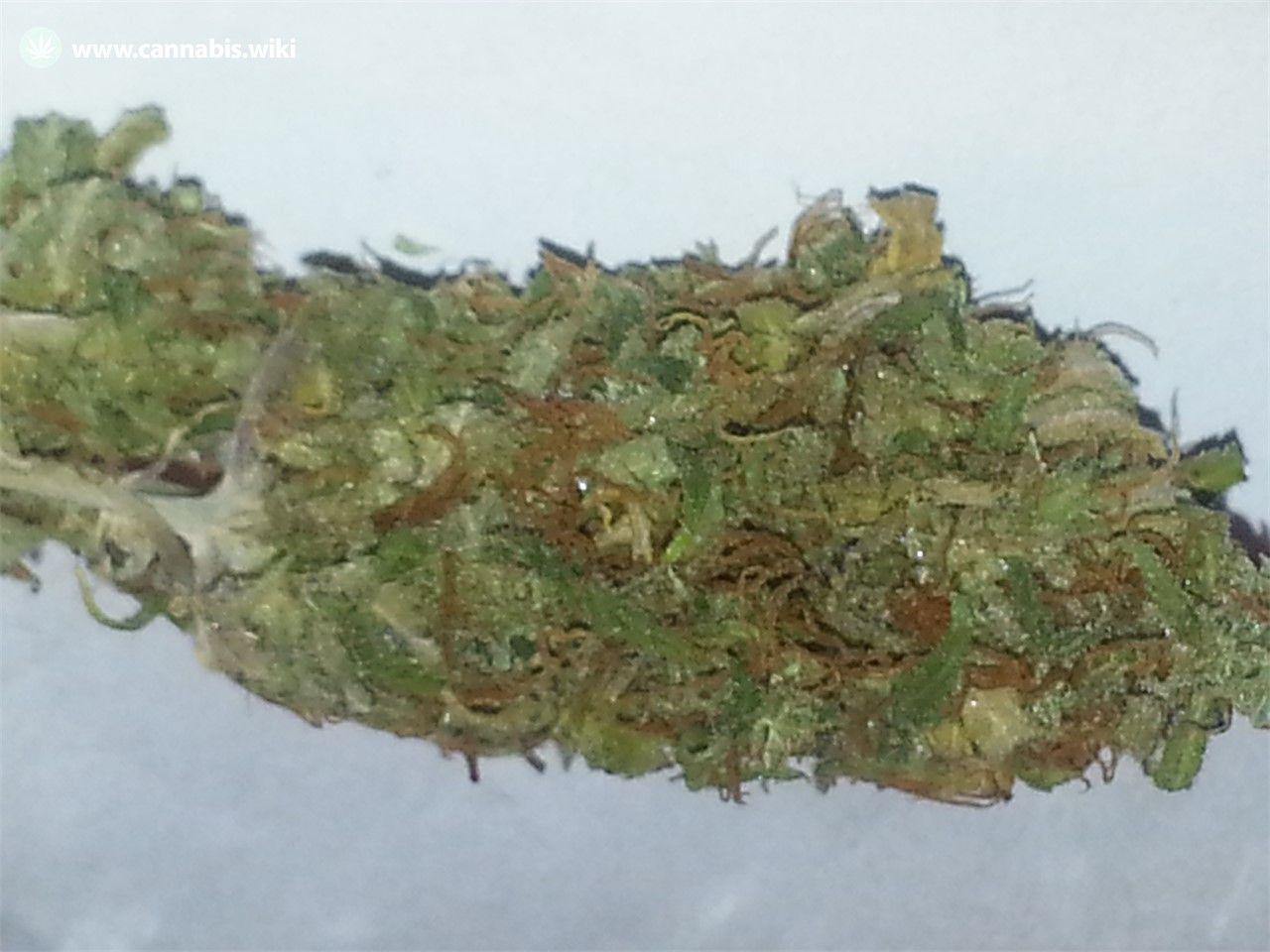 Cannabis Wiki - Strain Cherry Kola - Cka - Indica
