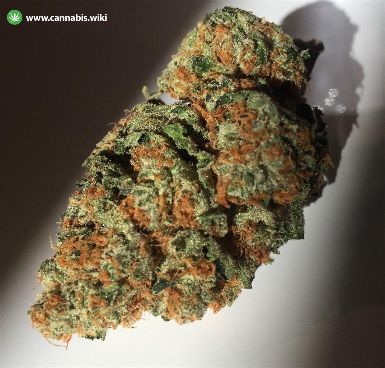 Cannabis Wiki - Strain Church OG - Chu - Indica