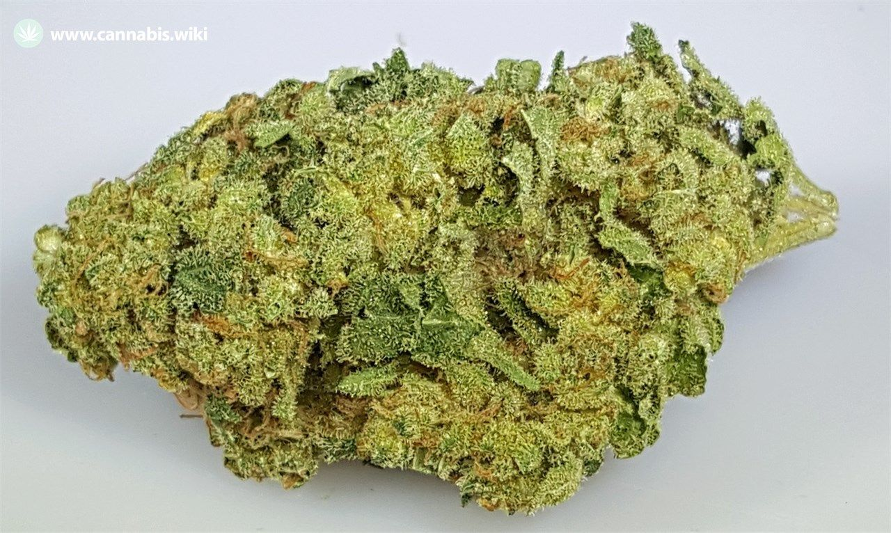 Cannabis Wiki - Strain Commerce City Kush - Com - Indica