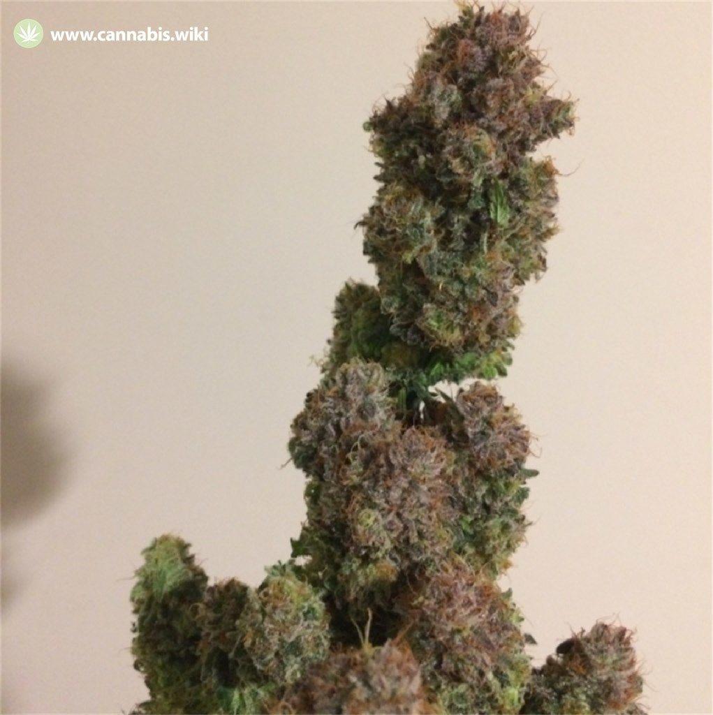 Cannabis Wiki - Strain Cream Caramel - Cre - Indica