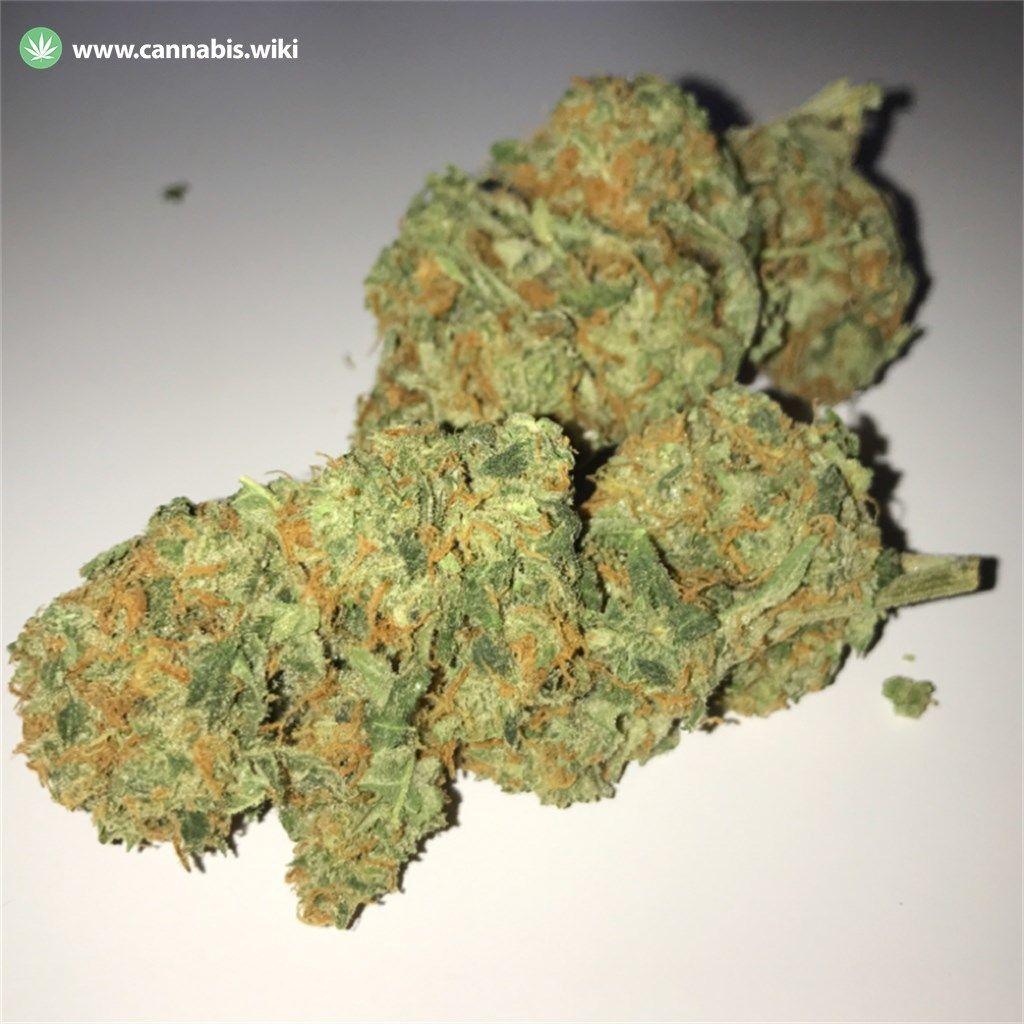 Cannabis Wiki - Strain Critical Kush - Cri - Indica
