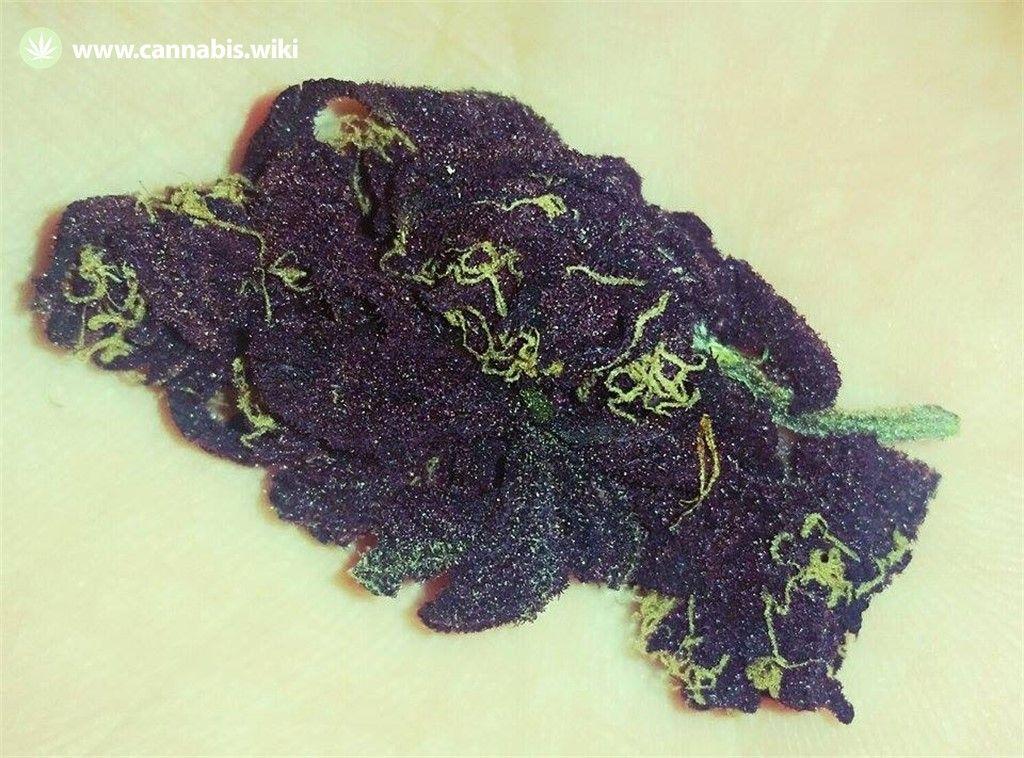Cannabis Wiki - Strain Deep Purple - Dep - Indica