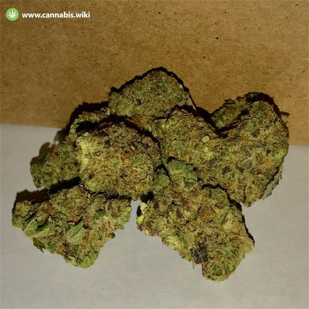 Cannabis Wiki - Strain DJ Short Blueberry - Dsb - Indica