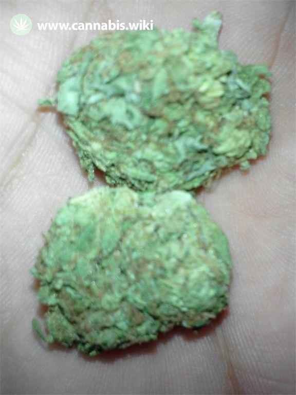 Cannabis Wiki - Strain Dorit - Dor - Indica