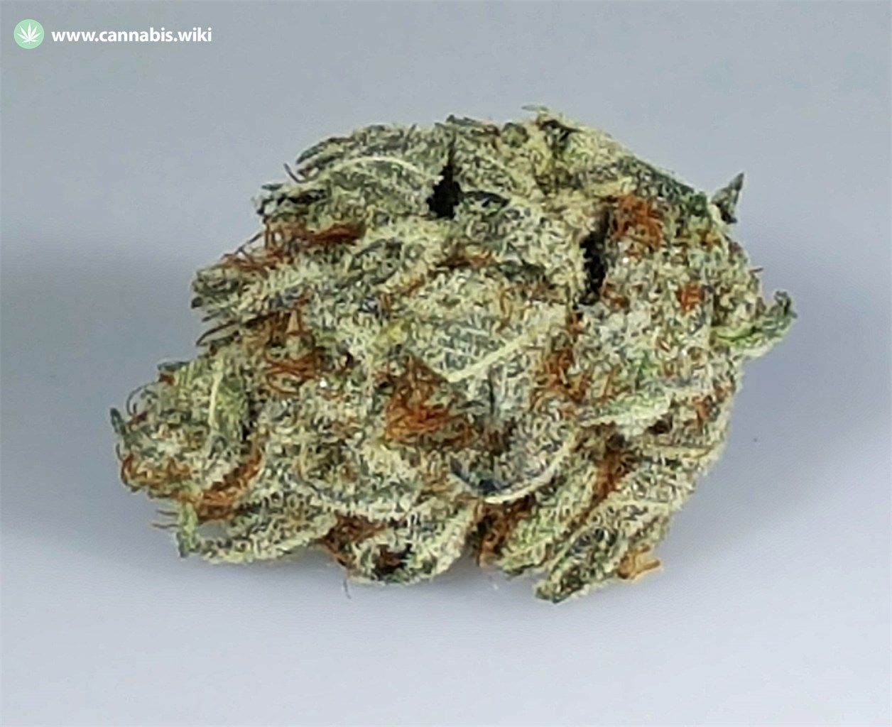 Cannabis Wiki - Strain Extreme OG - Ext - Indica