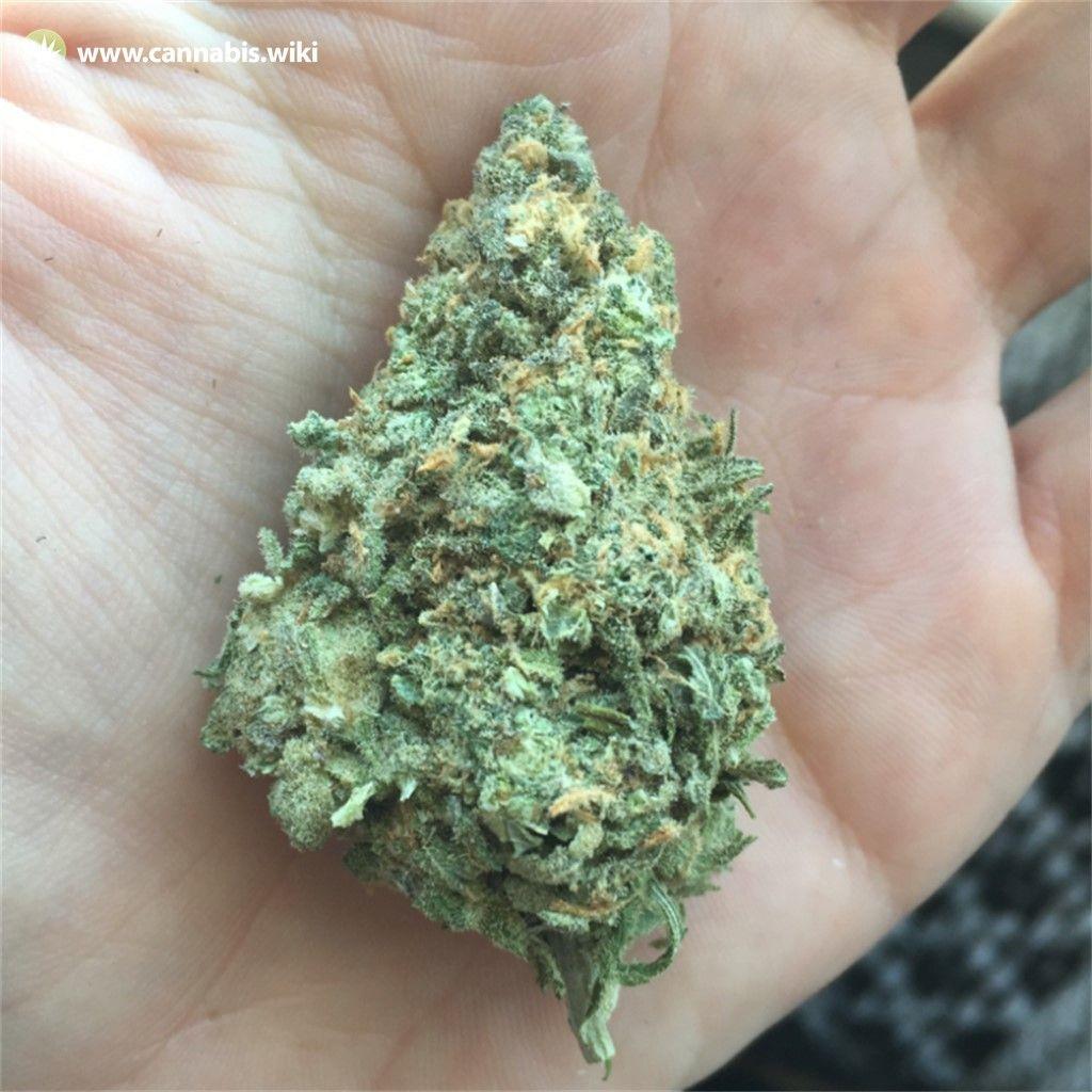 Cannabis Wiki - Strain Ghost OG Moonshine - Gom - Indica