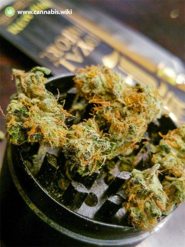 Cannabis Wiki - Strain Godberry - Gb - Indica