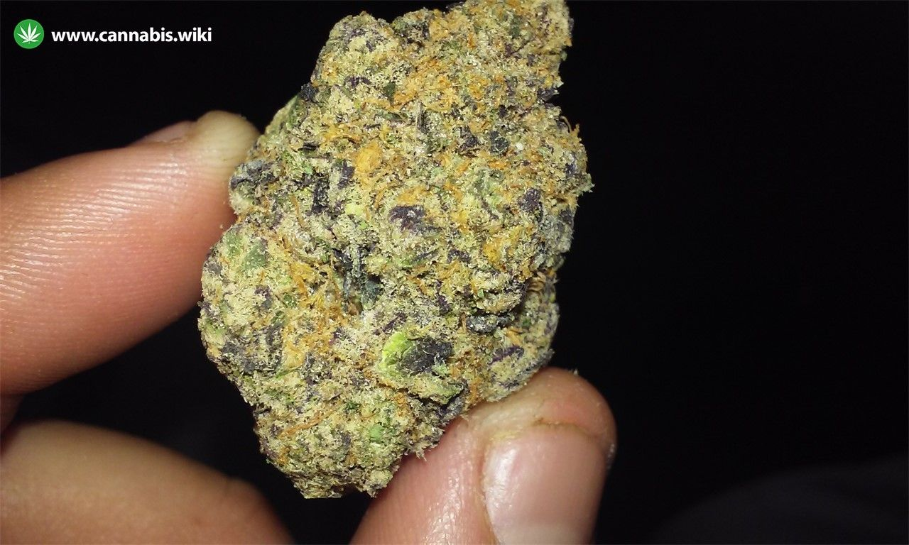 Cannabis Wiki - Strain Godfather Purple Kush - Gpk - Indica