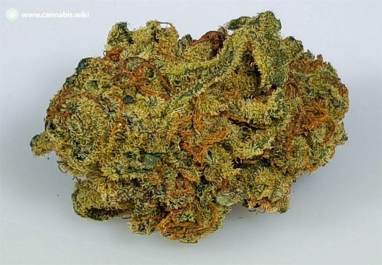 Cannabis Wiki - Strain Granddaddy Purple - Gdp - Indica