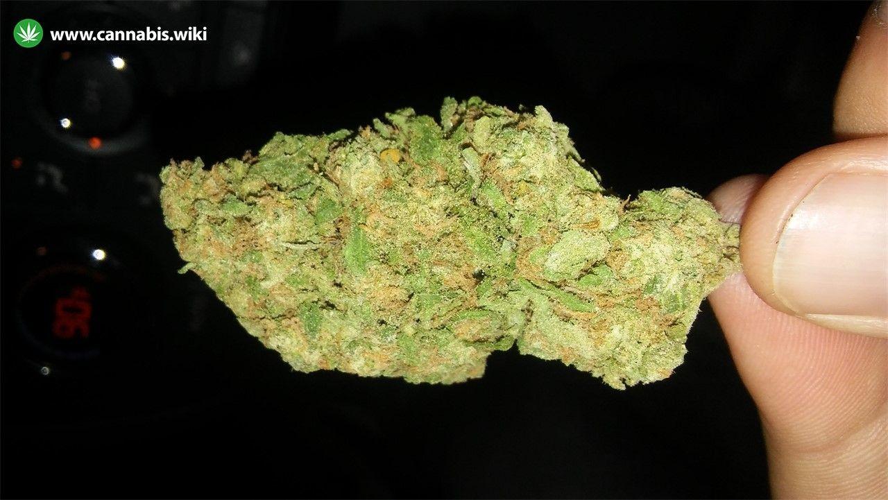Cannabis Wiki - Strain Green Kush - Gnk - Indica