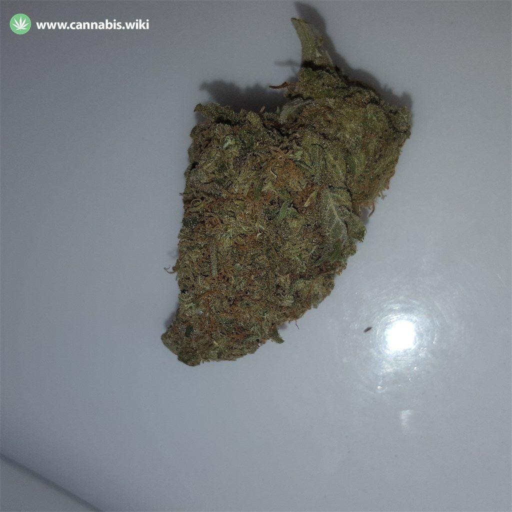 Cannabis Wiki - Strain Hash Plant - Hp - Indica