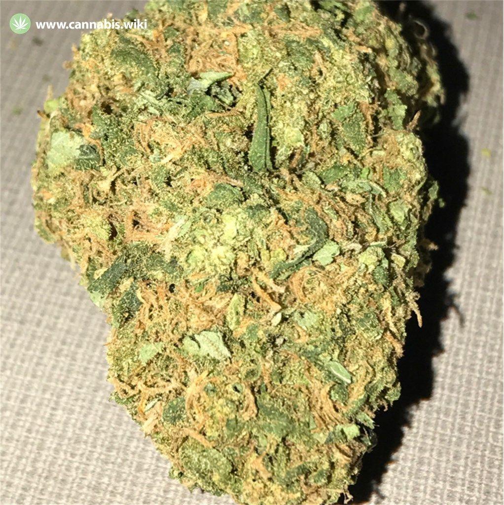 Cannabis Wiki - Strain Jupiter OG - Jup - Indica