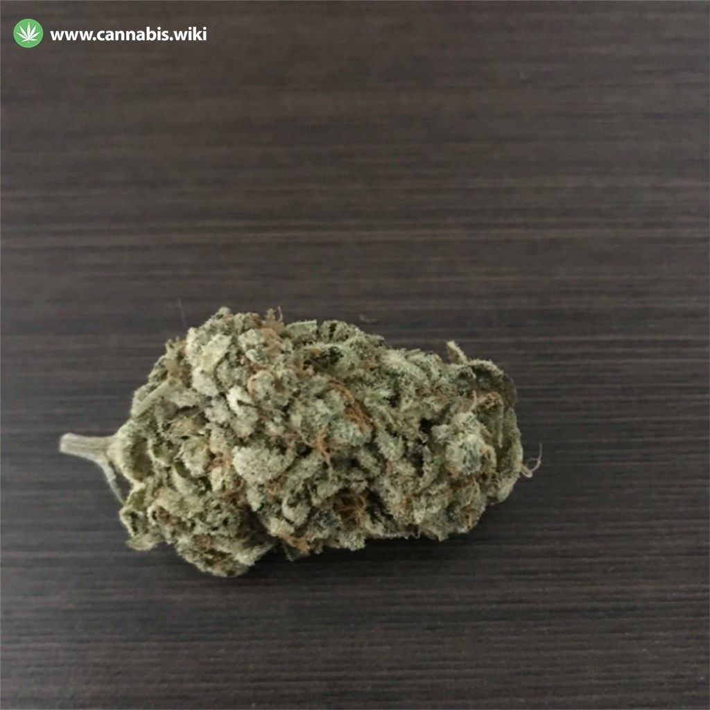 Cannabis Wiki - Strain King Louis XIII - Kng - Indica