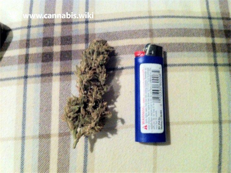 Cannabis Wiki - Strain Madagascar - Mag - Indica