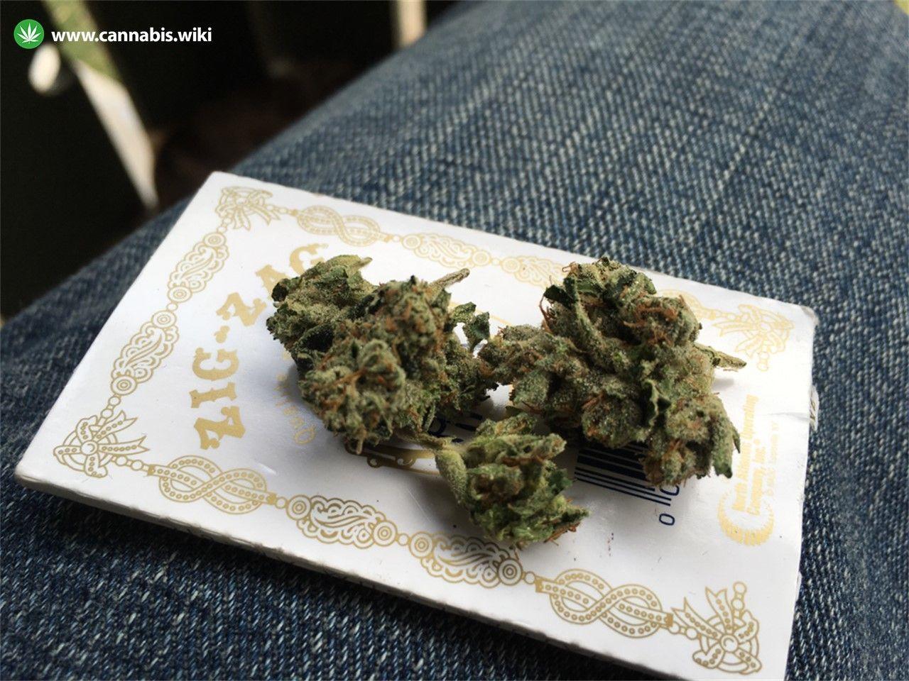 Cannabis Wiki - Strain Mars OG - Mar - Indica