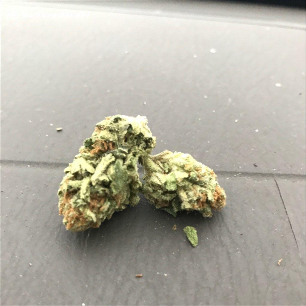 Cannabis Wiki - Strain Master Kush - Mks - Indica